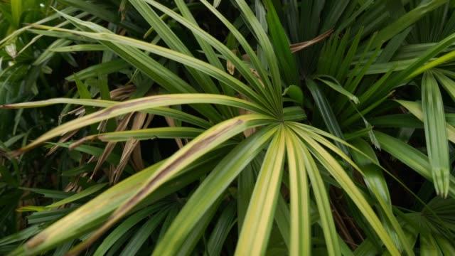 tropical tree leaf