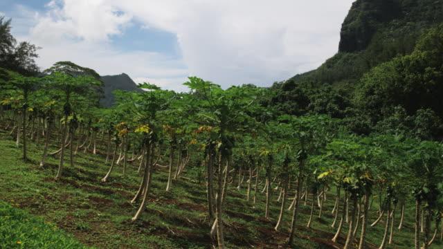 tropical trees - frankrikes utomeuropeiska områden bildbanksvideor och videomaterial från bakom kulisserna