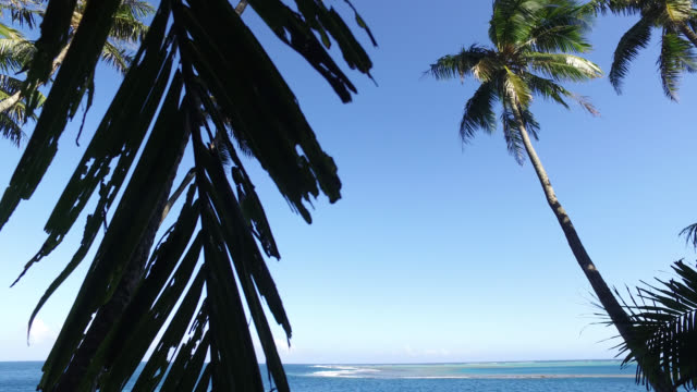 vidéos et rushes de tropical trees with the sea in the background. coconut - south pacific ocean