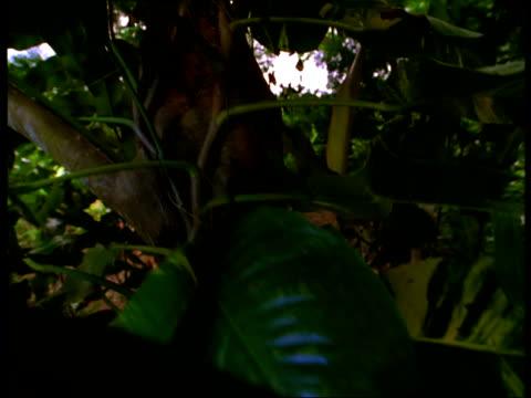 tropical vines grow on a trees in a green jungle. - 共生関係点の映像素材/bロール