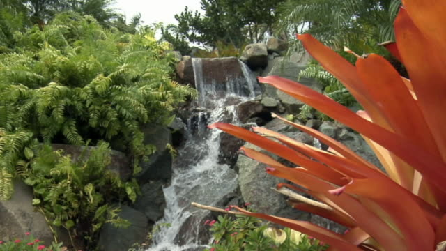 vídeos de stock, filmes e b-roll de la ws tropical waterfall flowing near orange flowers / antigua - kelly mason videos