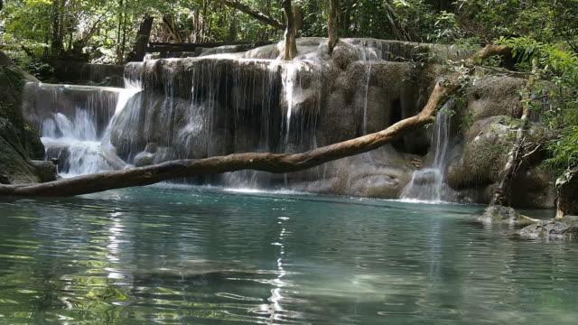 cascata tropicale - attività equestre ricreativa video stock e b–roll