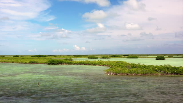 Tropical wetlands in the lower Florida Keys near Key West
