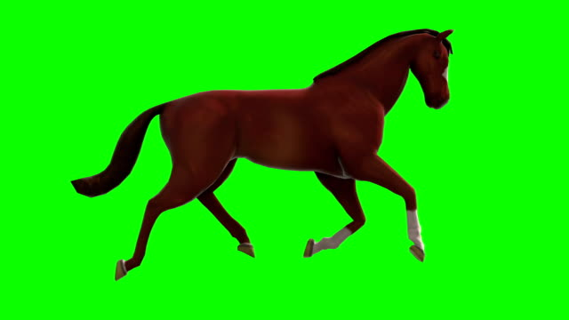 troting horse green screen (loopable) - horse stock videos & royalty-free footage