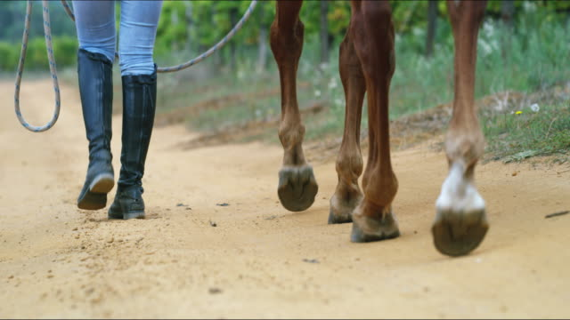 trotting together through life - horseback riding stock videos & royalty-free footage
