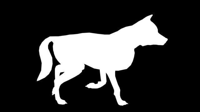 vídeos y material grabado en eventos de stock de trotting lobo (en bucle) - pata com garras