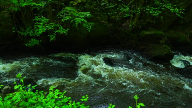 trou de philippou trail, dronne river, saint saud la coussiere, dordogne, perigord vert, nouvelle aquitaine, france, europe - nouvelle aquitaine stock videos & royalty-free footage