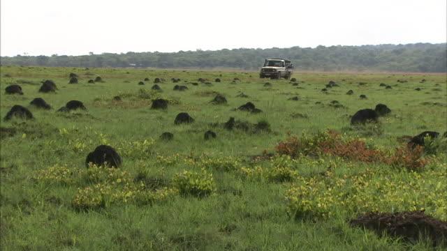 a truck drives across a savanna near a herd of antelope. - paletto da cricket video stock e b–roll