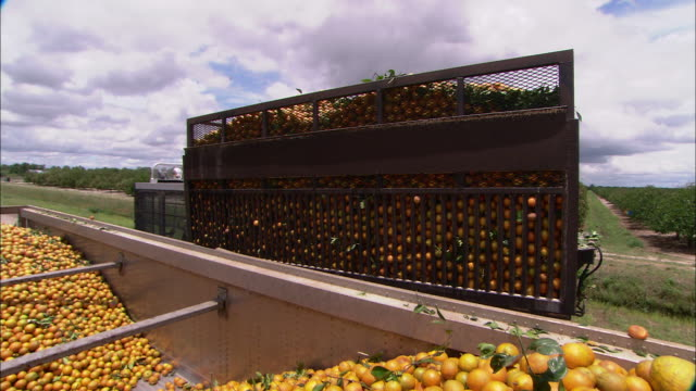 a truck dumps a load of oranges into a bin. - ascorbic acid stock videos & royalty-free footage