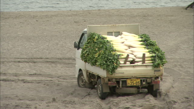A truck hauls radishes over to drying racks in Japan
