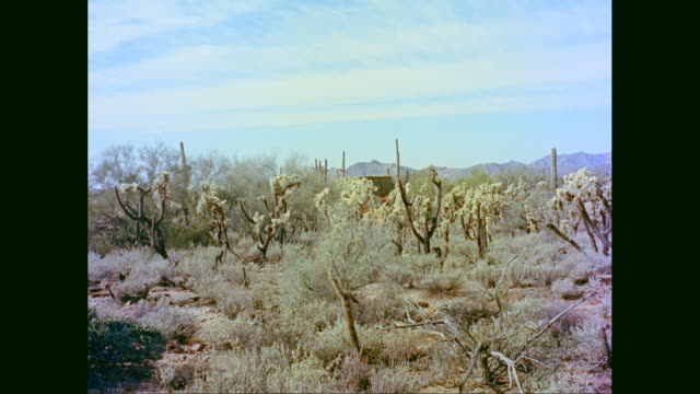 WS PAN truck passing through cactus field / United States