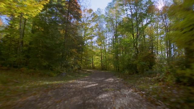 truck point of view dirt road in forest in autumn / wisconsin - strada in terra battuta video stock e b–roll