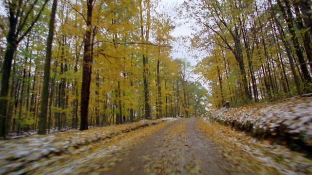 truck point of view dirt road in forest with light dusting of snow - strada in terra battuta video stock e b–roll