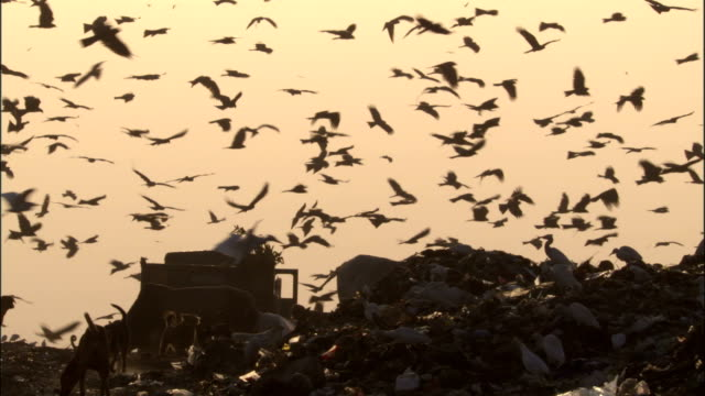 Truck reverses to tip birds fly overhead at sunset. Available in HD.