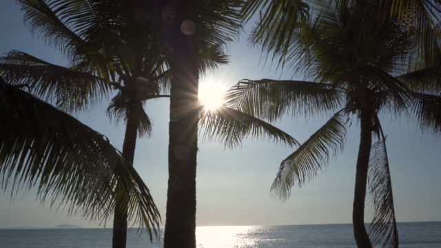 trucking shot - coconut tree on the tropical beach with sun in the middle - fan palm tree stock videos & royalty-free footage