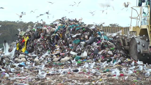 trucks move trash on a rubbish dump - bulldozer stock videos & royalty-free footage