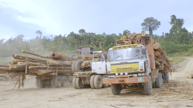 WS Trucks moving felled trees / Tawau, Sabah, Malaysia