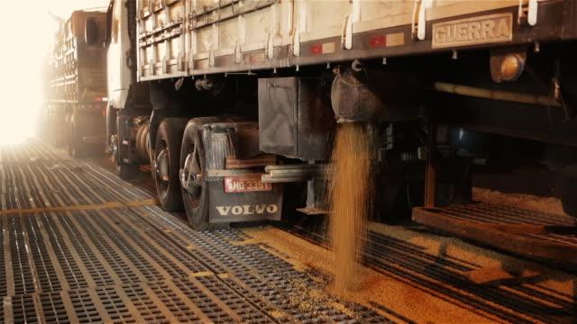 """ms, td trucks unload cargos of soy into silos at paranagua port / paranagua, brazil"" - soya bean stock videos & royalty-free footage"