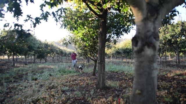 truffle hunter and his truffle dog walk the line of english oak and ilix quercus trees on the truffles australis farm near deloraine, tasmania,... - smelling stock videos & royalty-free footage