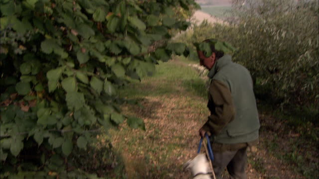 A truffle hunter leads his dog to a place under the trees, where the dog sniffs and begins to dig.