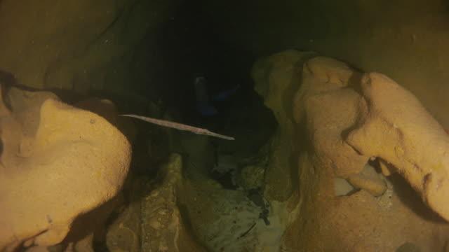 trumpetfish hiding in underwater cave - trumpet fish stock videos & royalty-free footage