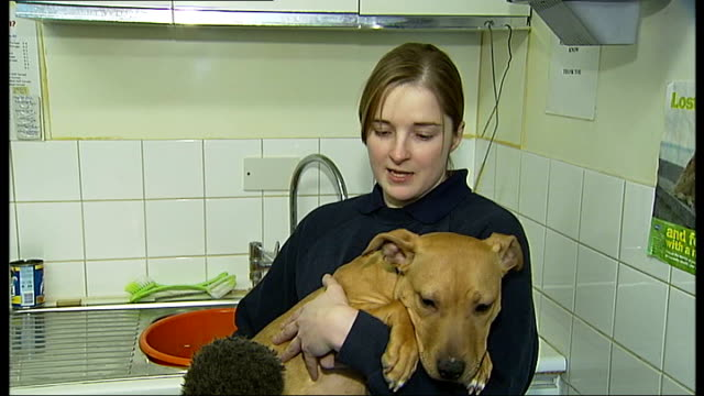 rspca trying to find homes for animals abandoned as unwanted christmas presents england london hillingdon int cat in cage puppy 'rudy' abandoned... - rspca stock-videos und b-roll-filmmaterial