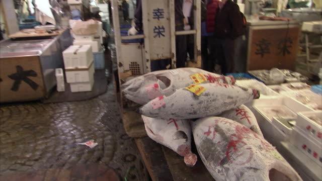 vídeos de stock e filmes b-roll de ws zo tsukiji fish market, tokyo, japan - peixe congelado