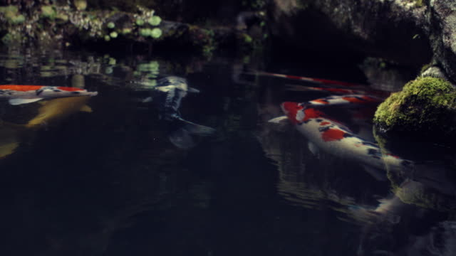 tsukuba garden koi carps pond slow motion 4k - local landmark stock videos and b-roll footage