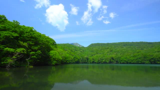 青森県の蔦沼 - 木製点の映像素材/bロール