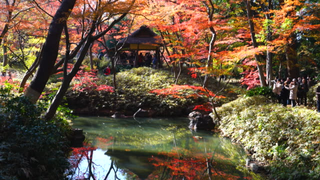 tsutsuji cyaya (tea house) is surrounded by autumn leaves trees and reflects to the pond in rikugien garden (traditional japanese garden) bunkyo-ku tokyo on december 03 2017. - formal garden stock videos & royalty-free footage