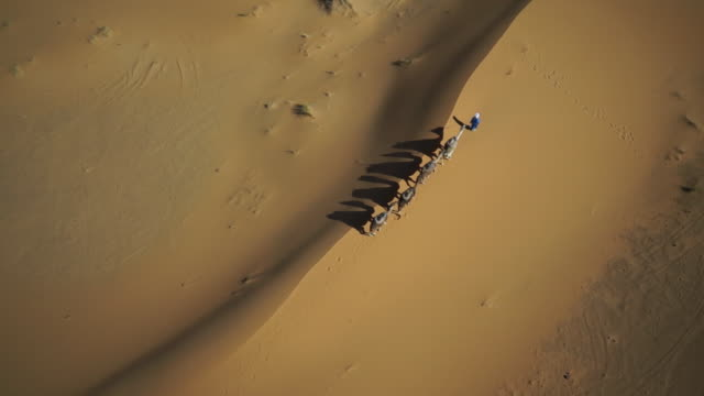 ws pov zo tuareg man with camel train in desert at morocco - camel train stock videos & royalty-free footage