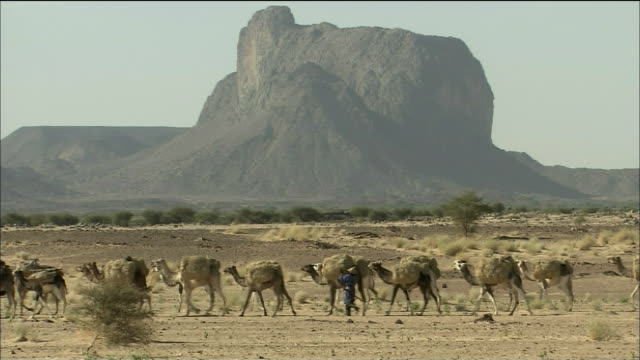 tuaregs of abarakan  - ニジェール点の映像素材/bロール
