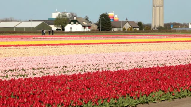 tulip field - 園芸学点の映像素材/bロール