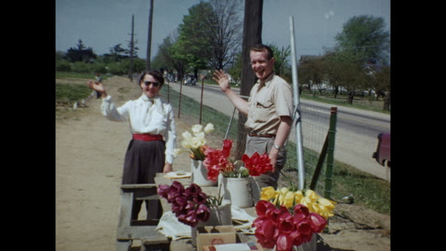1954 home movie tulip fields and couple selling tulips at roadside / regina, saskatchewan - saskatchewan stock videos and b-roll footage