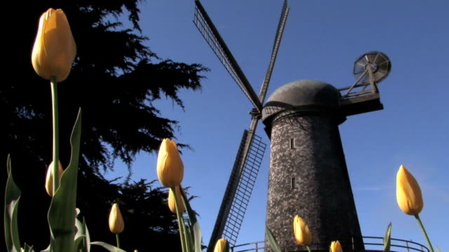 tulip garden and windmill - dutch culture stock videos and b-roll footage