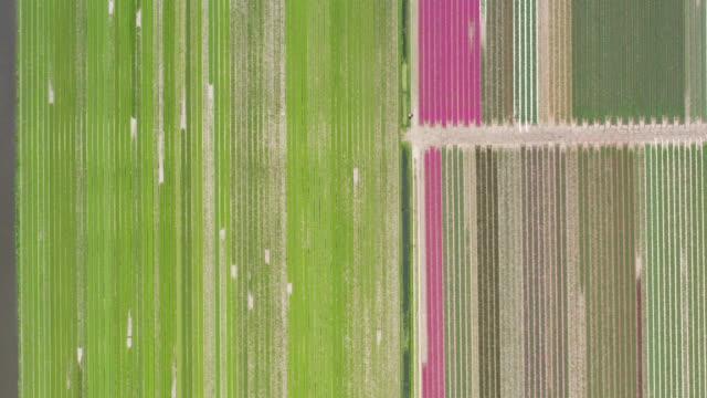 tulips camp in netherland - drone - オランダ点の映像素材/bロール