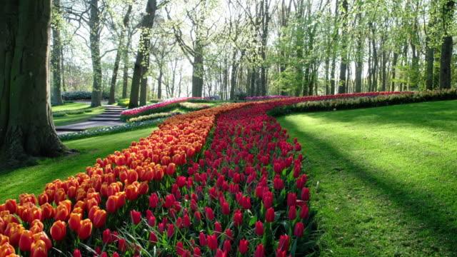 tulpaner i holländsk park - ourbaniserat motiv bildbanksvideor och videomaterial från bakom kulisserna