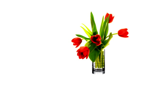 tulips. time lapse. - bouquet stock videos & royalty-free footage