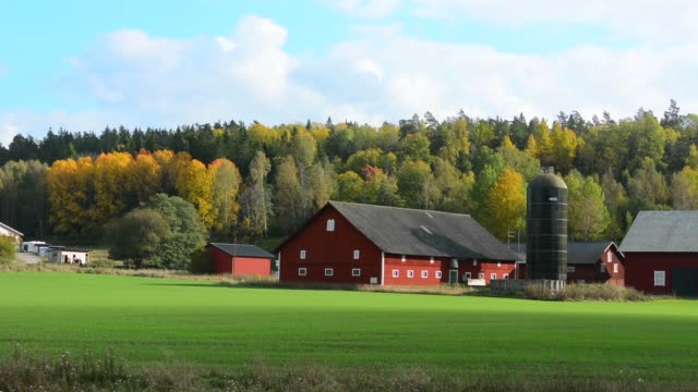 tumba sweden rural farming dairy with barn and home in green fields in fall colors - barn stock videos & royalty-free footage