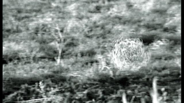 W tumbleweed blowing across field