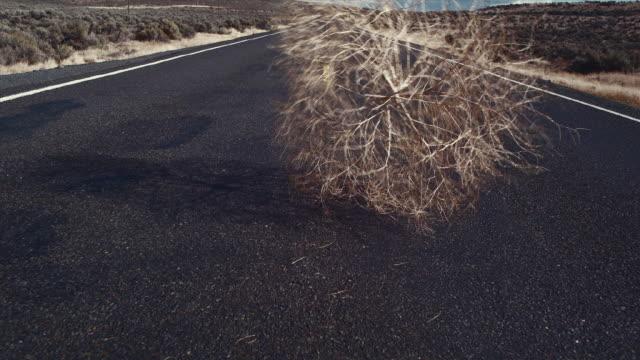 WS TU Tumbleweed blowing across road / Zillah, Washington, USA