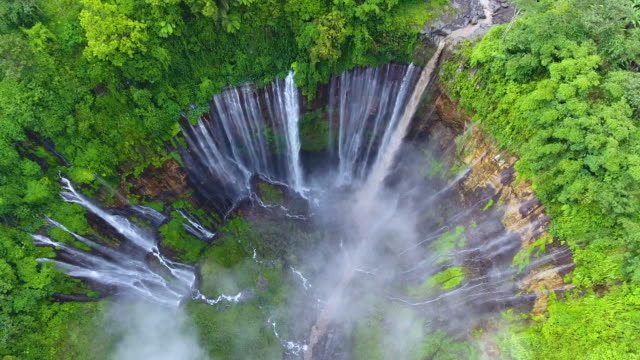 vidéos et rushes de sewu (sewu) - végétation verdoyante