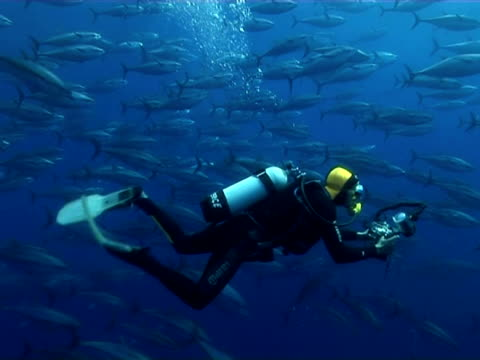 tuna and diver swimming inside cage, limassol, cyprus, - republic of cyprus stock videos & royalty-free footage