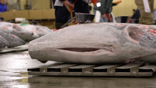 tuna auction at tsukiji fish market in tokyo japan - auction stock videos and b-roll footage