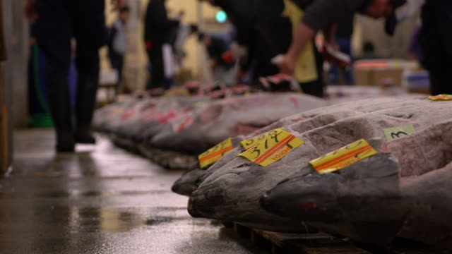 tuna auction at tsukiji fish market in tokyo japan - fishing industry stock videos & royalty-free footage