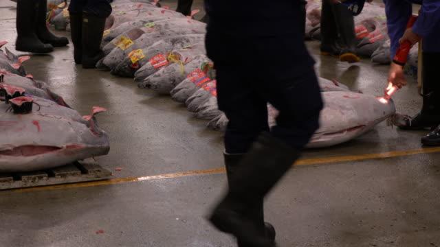 tuna auction at tsukiji fish market in tokyo japan - auction stock videos & royalty-free footage