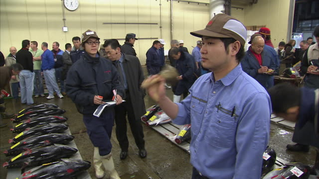 ms tuna auction at tsukiji fish market, tokyo, japan - auction stock videos & royalty-free footage