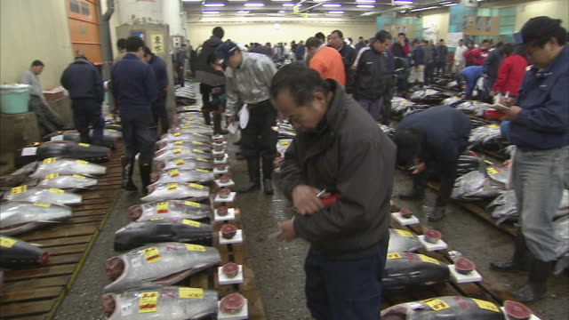 ws pan tuna auction room, tsukiji fish market, tokyo, japan - auction stock videos & royalty-free footage