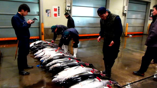 tuna caught in vietnamese waters were auctioned at a wholesale market in osaka on friday, marking a key step forward for vietnamese fishermen seeking... - 漁師点の映像素材/bロール