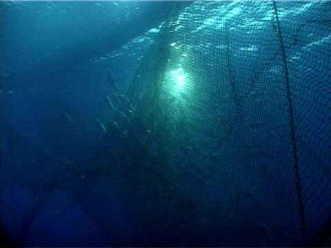 tuna swimming from net into cage, limassol, cyprus - fang stock-videos und b-roll-filmmaterial